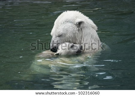 Bear with cub. Moscow zoo - stock photo