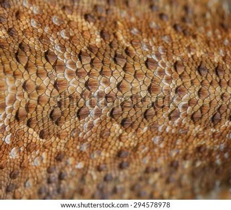 Bearded Dragon skin background - stock photo