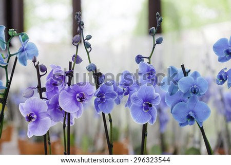 beautiful blue orchids - stock photo