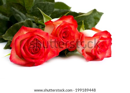 Beautiful bouquet  roses