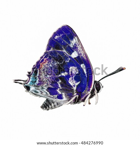 beautiful  butterfly isolated on white background