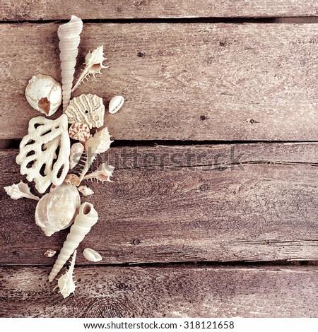 beautiful seashells on the wood background               - stock photo