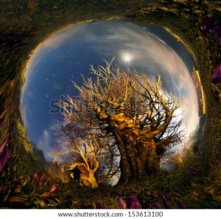 beauty of the rising moon glow over the wild forest Huge beech photographed panoramic Cameras with beautiful night lighting. The shadow belongs to author.  background is collected in a spatial ring  - stock photo