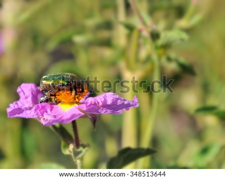beetle on a flower under green background - stock photo