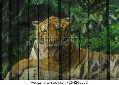 """bengal tiger"" Mural. The wood painting  concept"