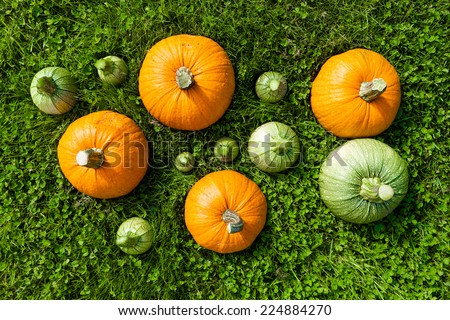 5 big and 7 small pumpkins on the green grass/Pumpkins set on the green/Pumpkins Harvest on grass from top - stock photo