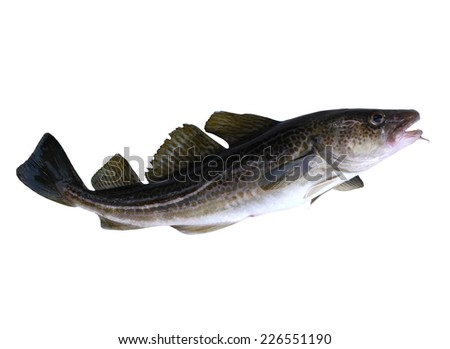 Burbot Stock Photos, Royalty-Free Images & Vectors ...