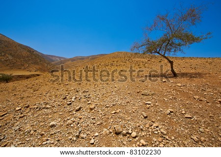 Big Stones and Tree  in Sand Hills of Samaria, Israel