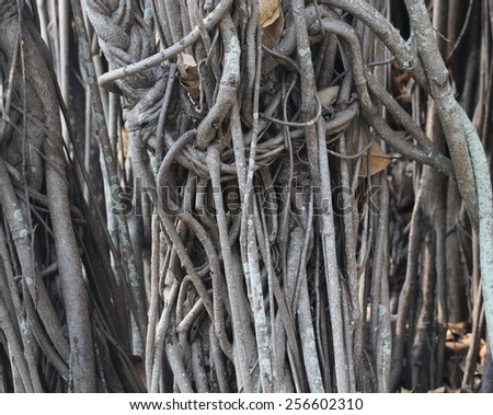 big tree root background - stock photo