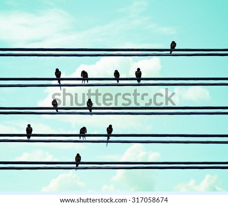 birds on wires over blue sky with blue sky background toned with a vintage retro instagram filter app or action effect  - stock photo