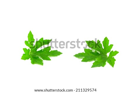 Bitter cucumber-chinese leaf on white background