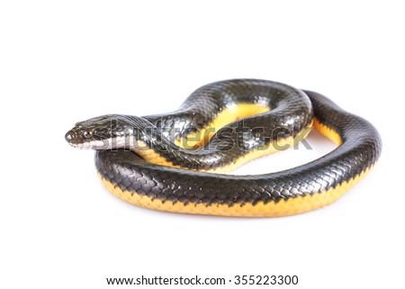 black mamba - stock photo