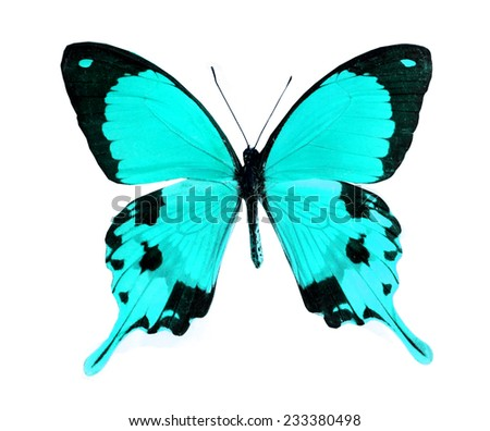 blue butterfly isolated - stock photo