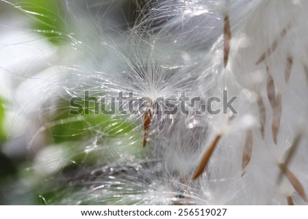 blurred white grass seed