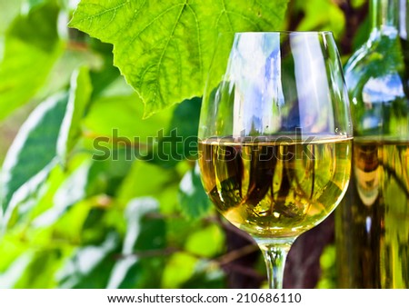 bottle and glass with white wine in vineyard - stock photo