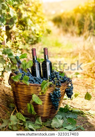 Bottles of red wine and grapes in wicker basket