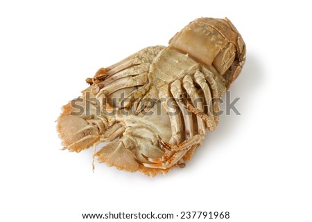 Bottom of a cooked flathead lobster on white background