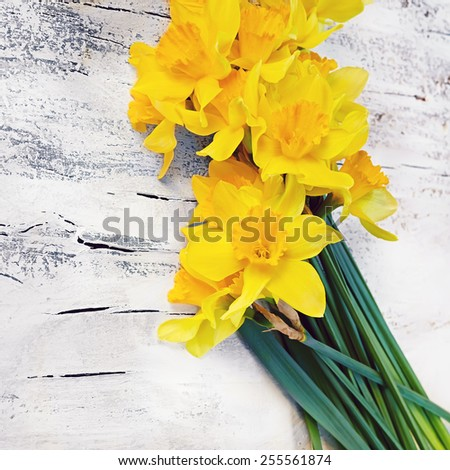 bouquet of fresh spring narcissus flowers on white wooden background in vintage style - stock photo