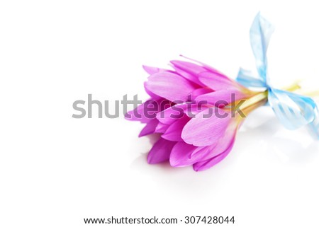 bouquet of  purple crocus flower. blossom time - stock photo