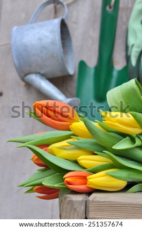 bouquet of tulips on wooden background with gardening accessories - stock photo