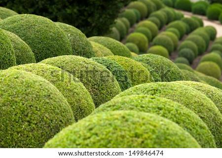 Boxwood  - Green garden balls in France, - stock photo