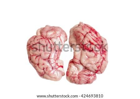 Brain on ispolated white background - stock photo