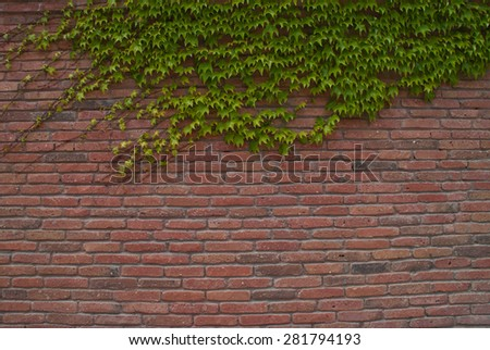 Brick wall with vine branches. Background