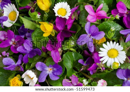 brightly colored spring flowers - stock photo