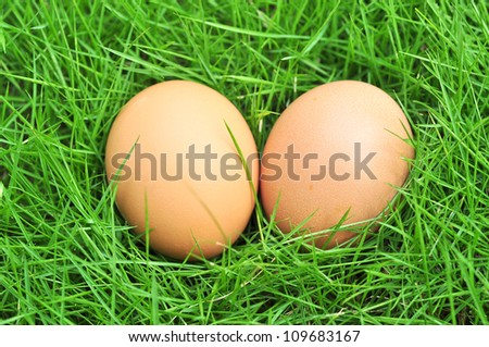 brown eggs on green grass