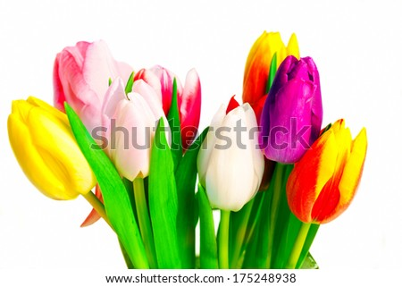 Bunch of tulips on white background,studio-shot