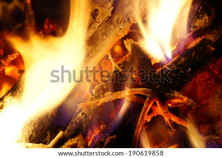 Burning wood from the tree.