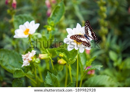 butterfly on red flower - stock photo