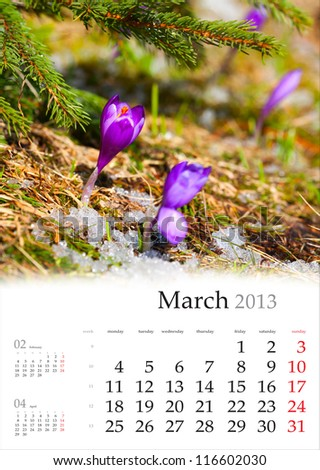 2013 Calendar. March. Purple crocuses through the old grass - stock photo