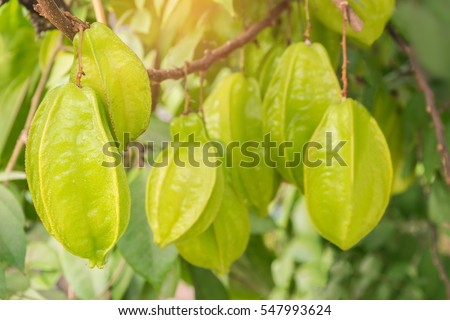 Carambola Stock Images, Royalty-Free Images & Vectors | Shutterstock