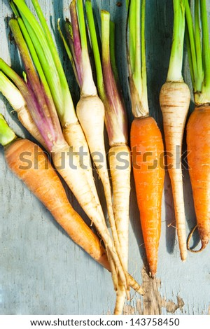 carrots and celery root on a wood background - stock photo