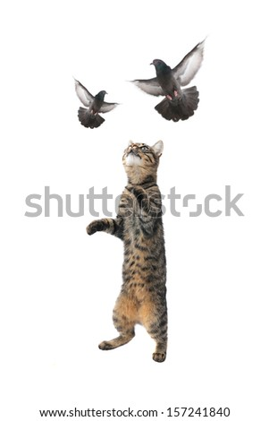 cat and  pigeon in flight on a white background - stock photo
