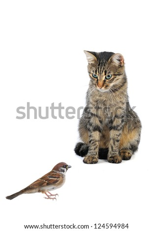 cat and sparrow on a white background - stock photo