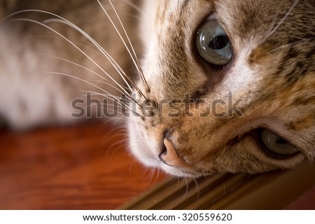 Cat, cute funny cat close up, relaxing cat, cat resting, cat sleeping, elegant cat in colorful wooden texture blur background - stock photo