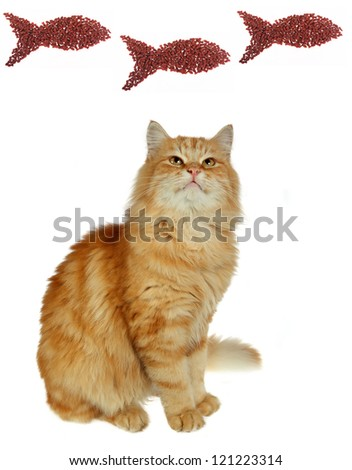 Cat eating dry cat food - stock photo