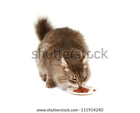 cat eats dry cat food on a white background - stock photo