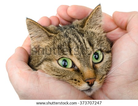 Cat in the hands