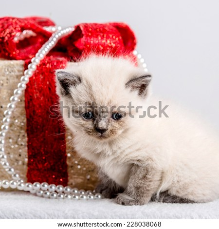 cat kitten kitty christmas toy gift present