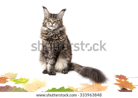 cat lying on autumn leaves on a white background. - stock photo