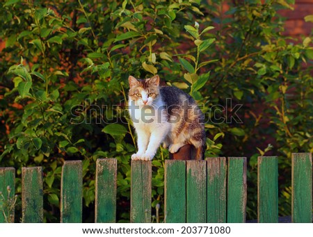 cat sitting on a wooden fence. outdoors