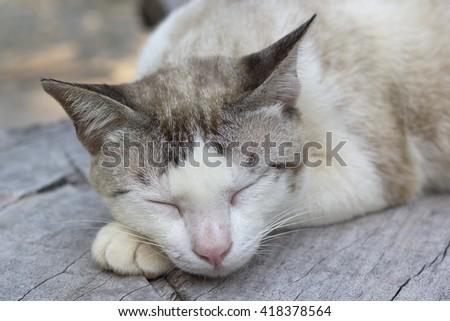 cat sleep cute - stock photo