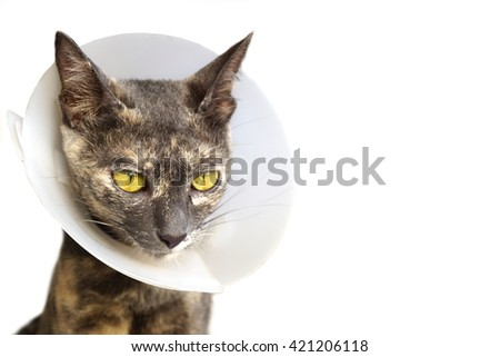 cat wearing neck collar to protect and not to lick after surgery on a white background