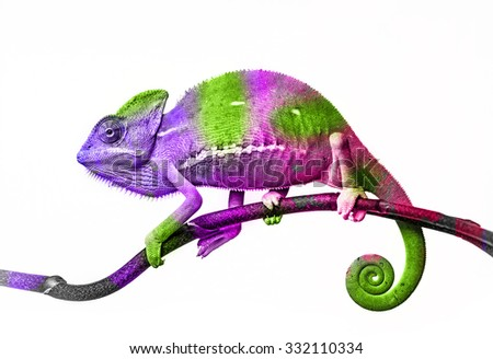 chameleon and colors
