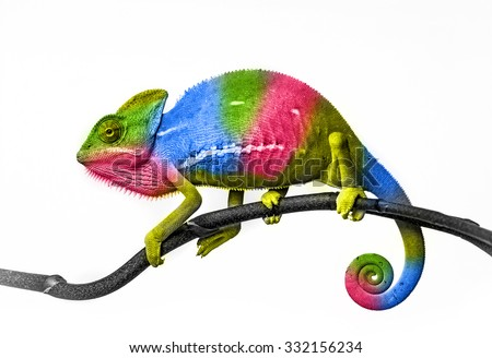 chameleon - colors - stock photo