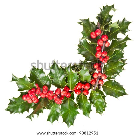 christmas garland of european holly Ilex corner border close up isolated on white - stock photo