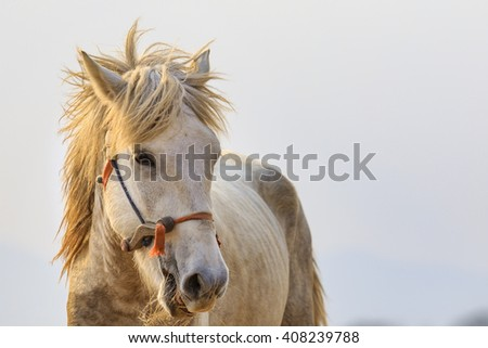 close up face of white horse head on  white background - stock photo